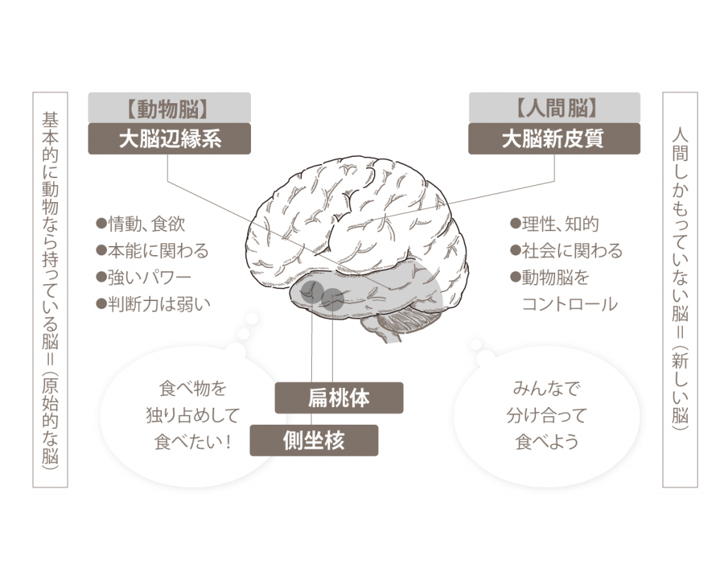 動物脳・人間脳