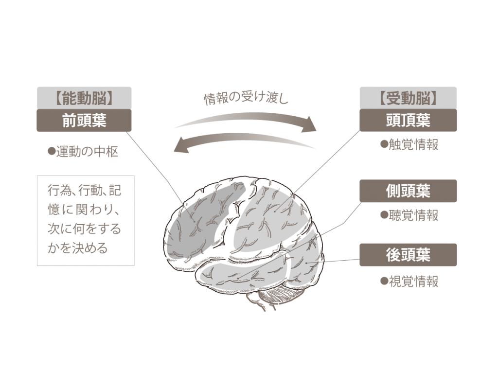 受動脳・能動脳